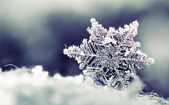 snowfalke
